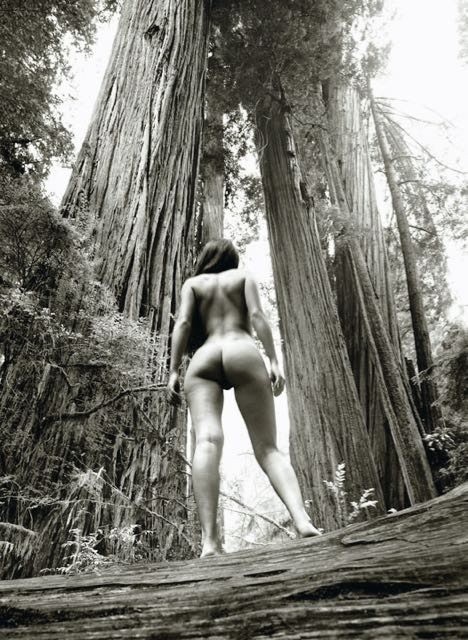 Redwood Nude 1